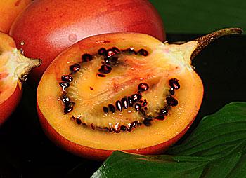 paradajkovnik grandiccio