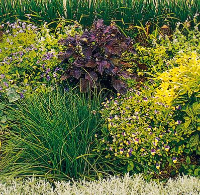Pestovanie byliniek v záhrade