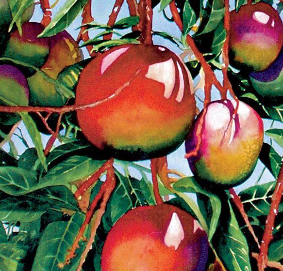 pestovanie exotickeho ovocia v byte