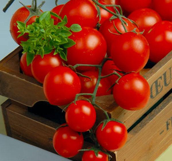 Picolino® koktailové paradajky