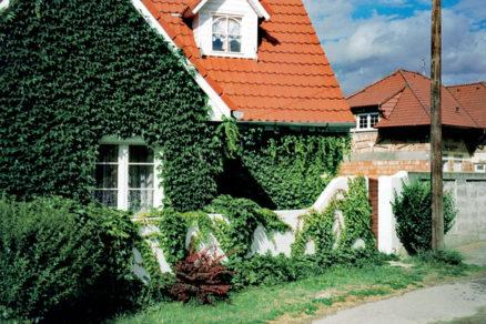 Popínavé rastliny skrášlia zvislé plochy
