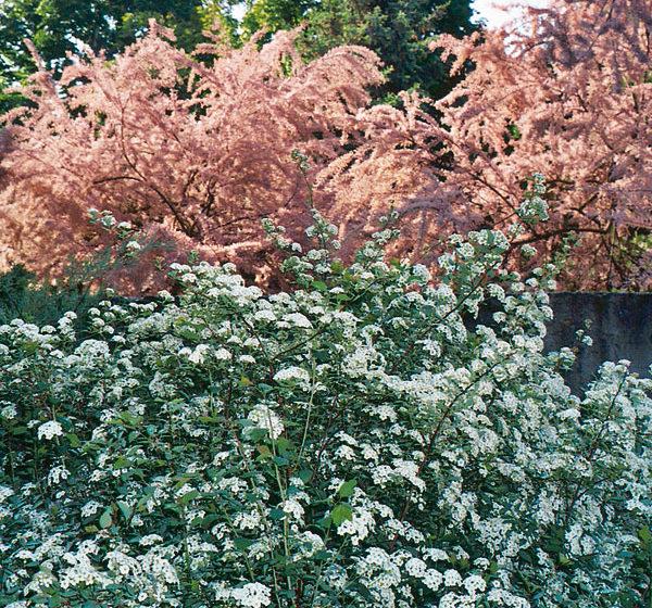 prakticke rozmnozovanie rastlin v zahrade
