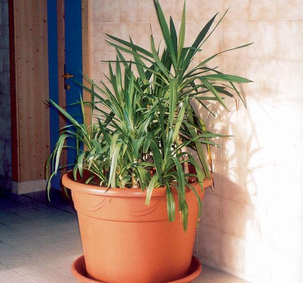 presadzanie rastlin do kvetinacov