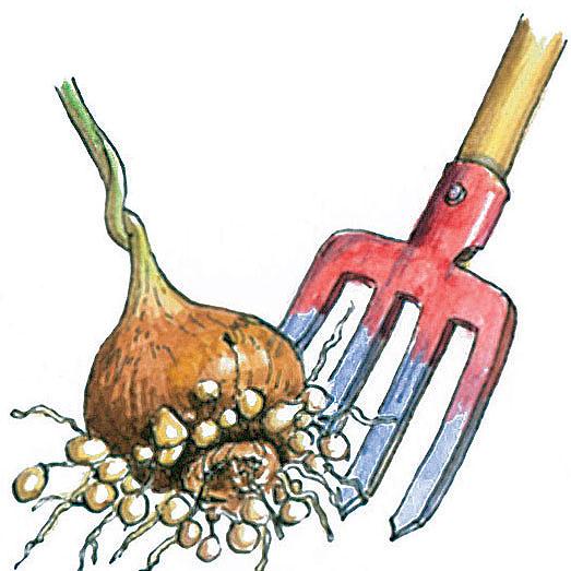 prezimovanie hluznatych rastlin