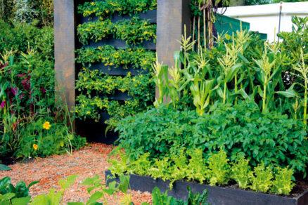 raselinova stena riesenie do bytu aj malej zahrady