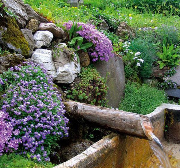 rastliny v zahrade na svahu