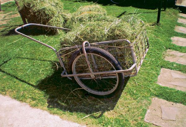 rucny lis na suchu travu