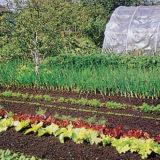 Sadíme teplomilnú zeleninu I.