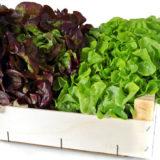 salatova zelenina vskratke