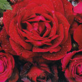 Spojenie farieb a vône kvetov