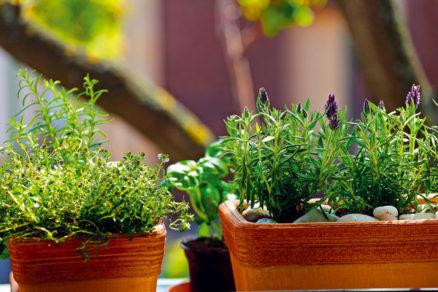 Spravte si na okne bylinkovú záhradku