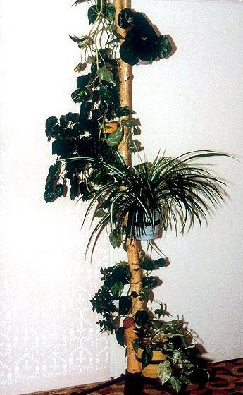 stojany na crepnikove kvety