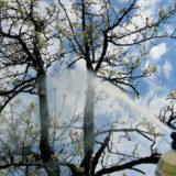 striekanie stromov
