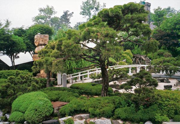 Stromy a kríky ako solitéry v záhrade