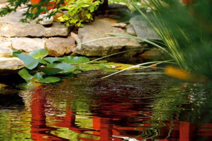 tajomstvo japonskej zahrady