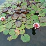 udrzba zahradneho jazierka