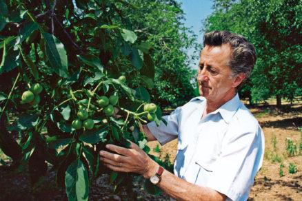 vegetativne rozmnozovanie orecha kralovskeho