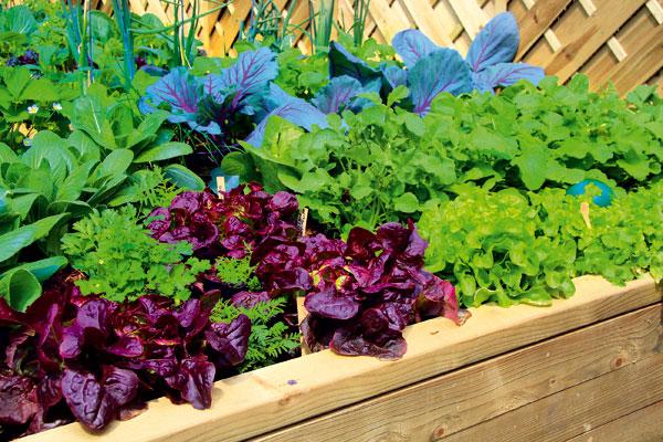 vypestuje si zeleninu na balkone