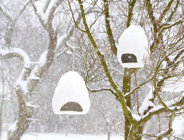 Vyrobte si netradičné zimné kŕmidlá pre vtáky