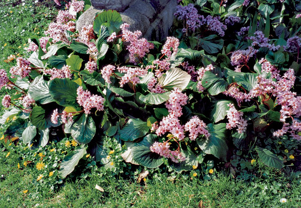 vzdyzelena zahrada