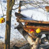 zahrada cez zimu
