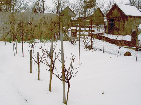 zahradkar v zime