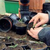 zaklady rozmnozovania rastlin