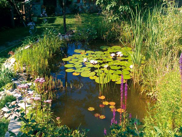 zalozte si zahradne jazierko bez drahych technologii