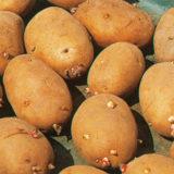 Zber a skladovanie ovocia a zeleniny
