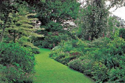 Zelená je tráva, údržba je hra I.