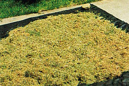 Zelené hnojivo a buriny