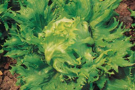zelenina na jesenny zber