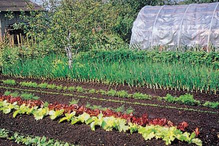 zeleninova zahrada a trojrocny plan striedania plodin