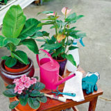 zimna starostlivost o interierove rastliny
