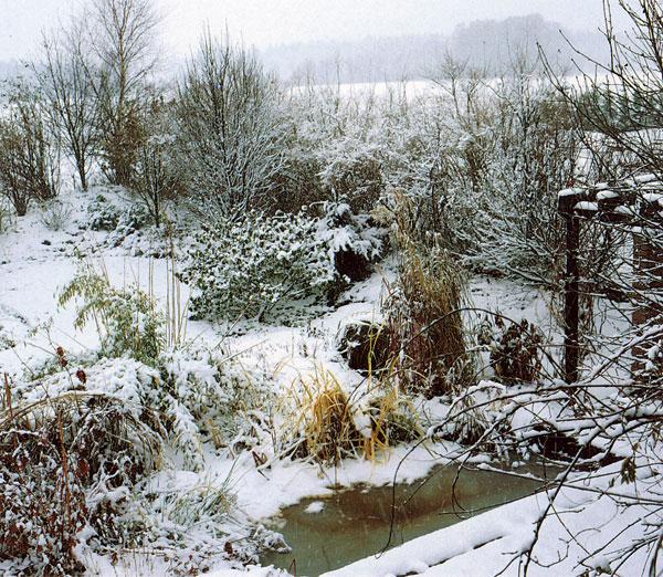 Zimné a jarné mrazy v záhrade