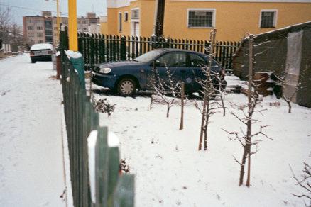 zimny rez ovocnych stromcekov a krikov