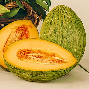 Žltý melón Marlene